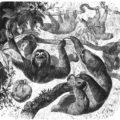 Sloth woodcut